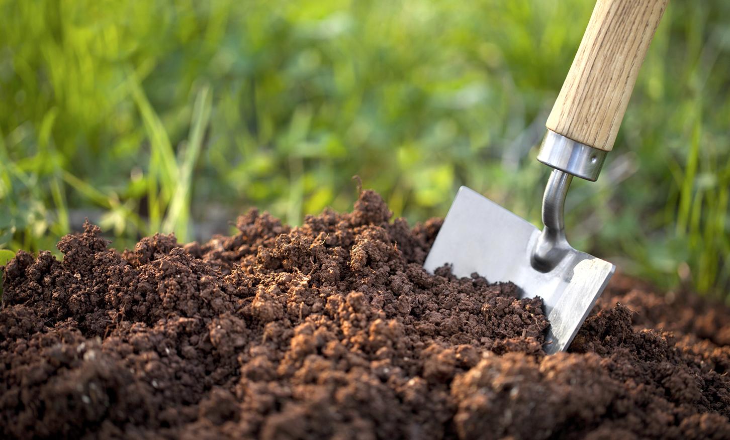 organic soil near me