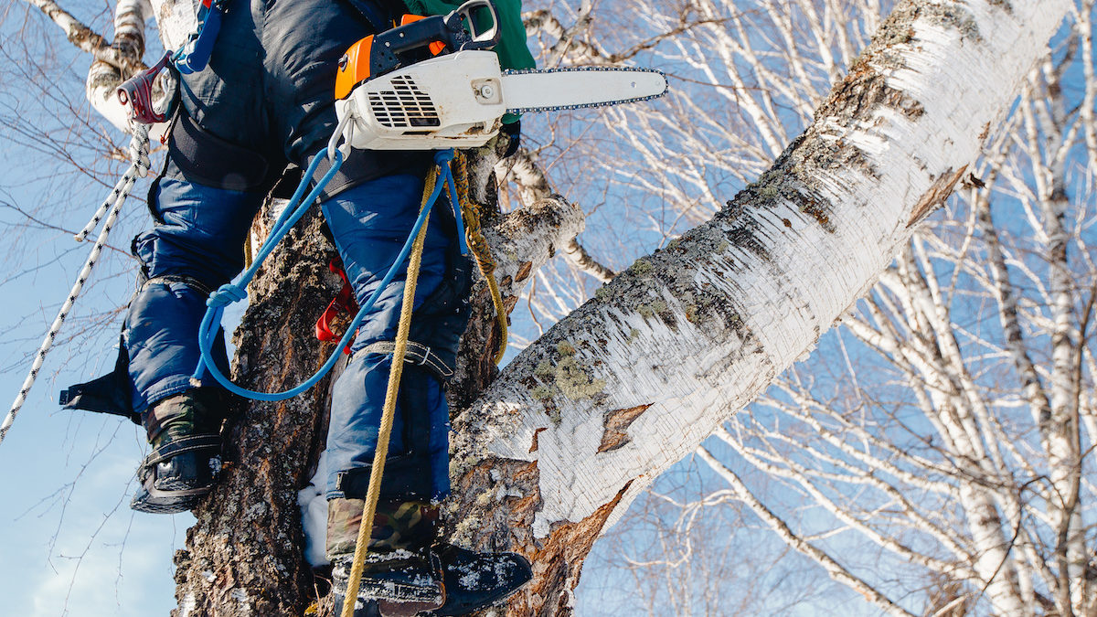 arborist certification cost