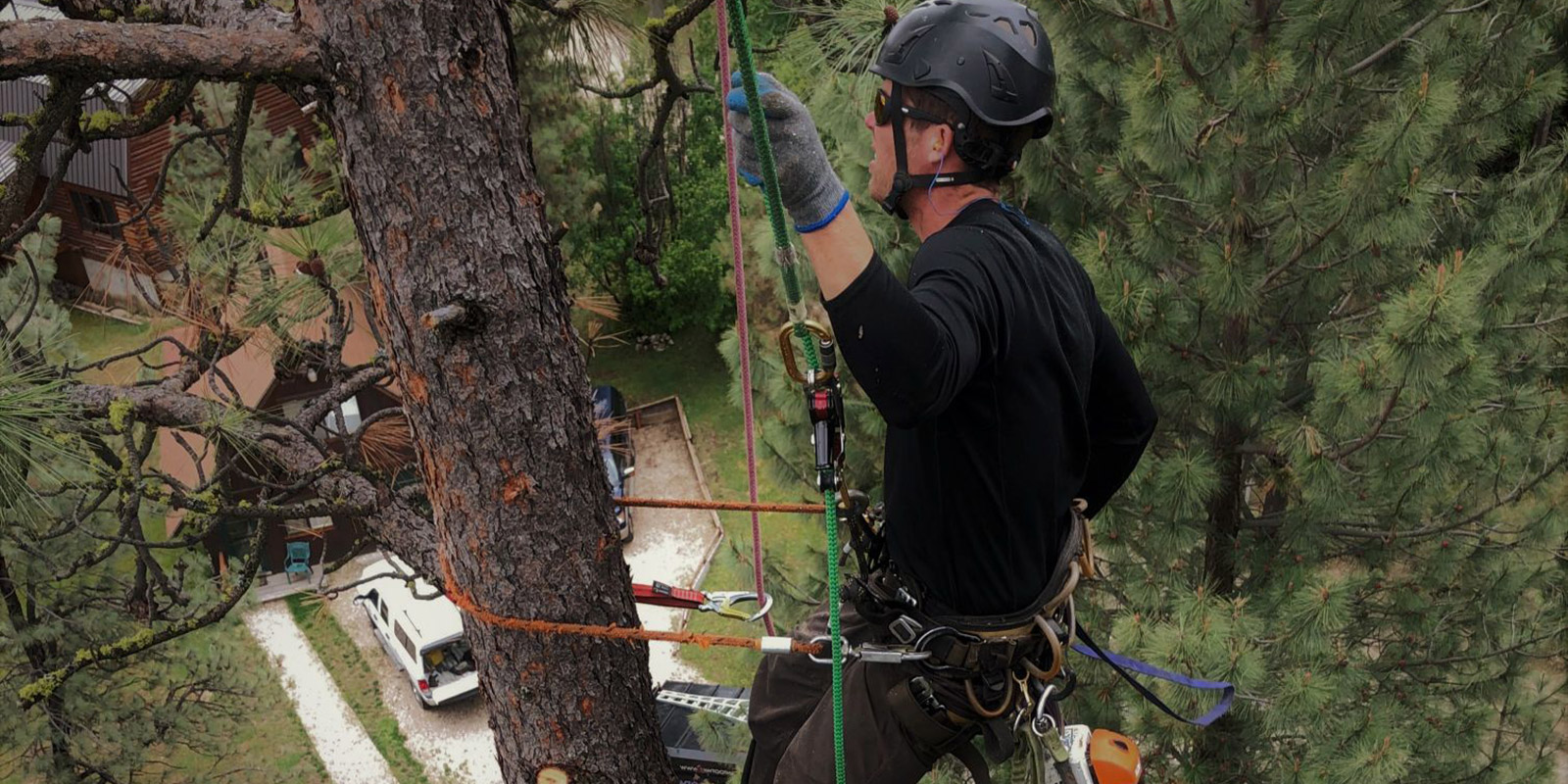 tree service near me free estimate